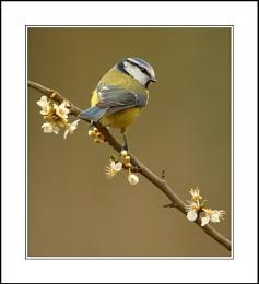 Same Perch, New Bird