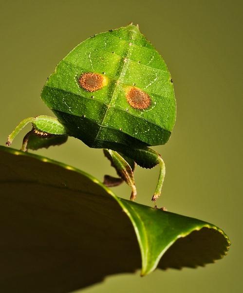 A leafs butt