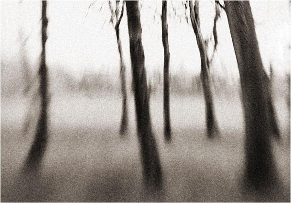Melting Trees by Bradfleet12
