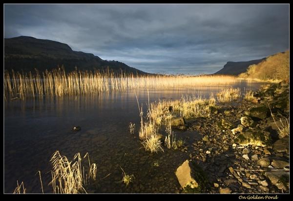 On Golden Pond by Sconz