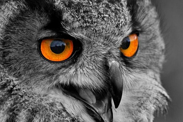 3 Owls by anpix