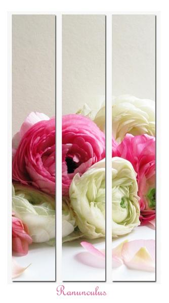 Ranunculus Triptych by Mewinty