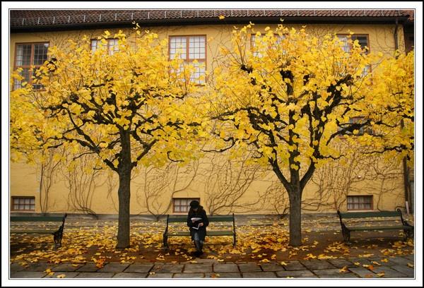 Autumn by jacekb