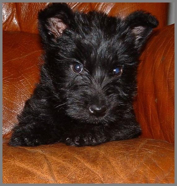 Shona as a puppy by sanjan