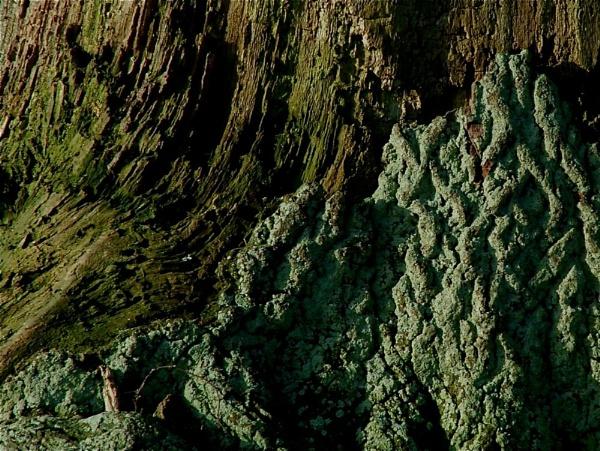 Tree greens by alansdottir