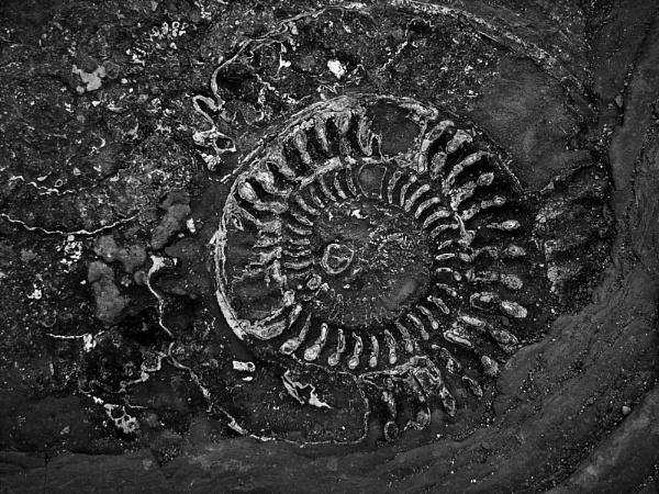 Ammonite by alansdottir