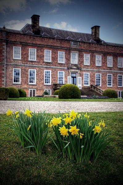 daffs @ erddig country house by urdygurdy