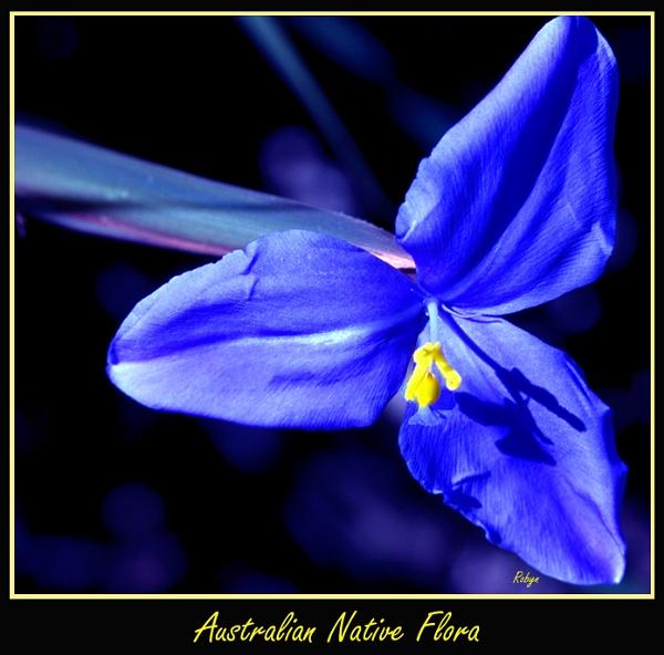 Australian Flora by Robyn2012