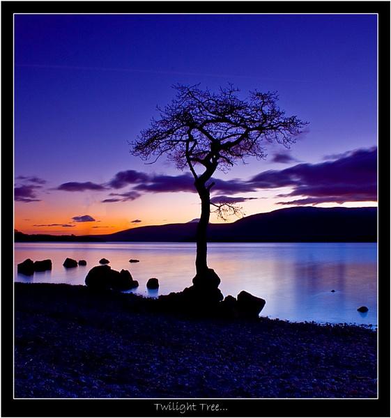 Twilight Tree by Mark_Callander