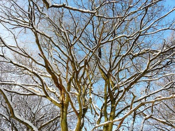 snowy tree by kanecompact