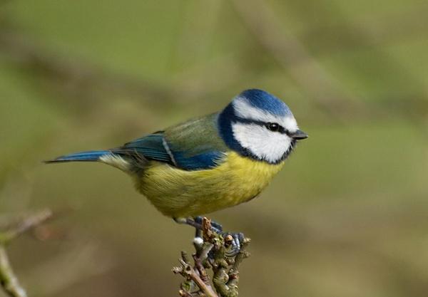 Little ol\' Bluey by Tim70_99