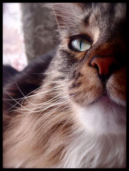 Gorgeous Eye. by Haley