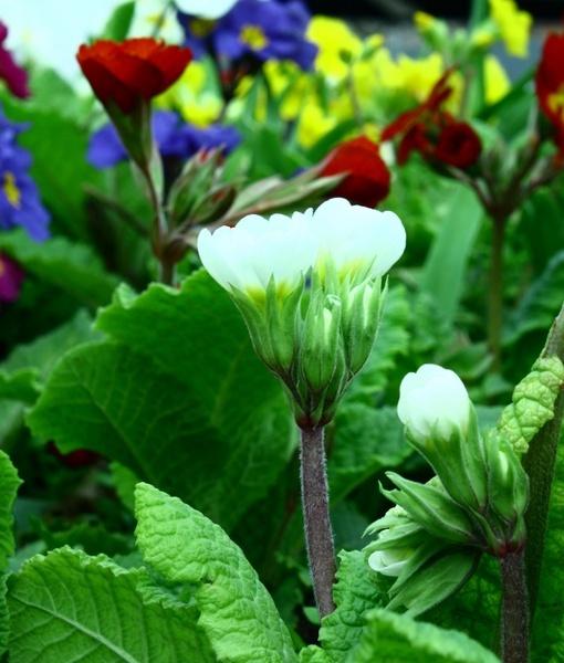 Bloom by Surya