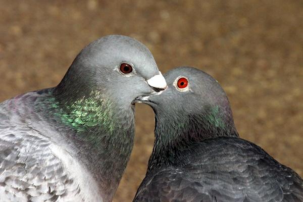 Kissing by SteveMoulding