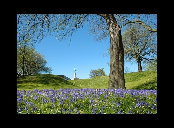 Blue Bells by jaysphotography
