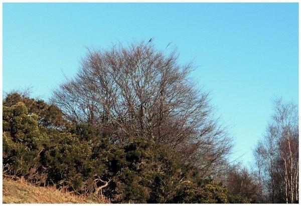 Lonely bird by scotyboy