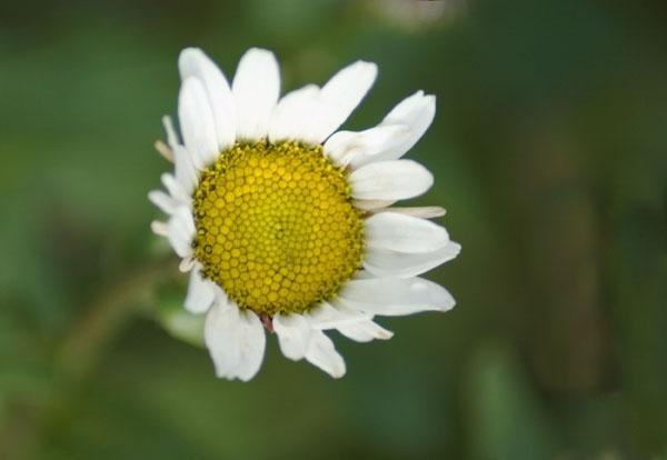 Open flower by Emmog
