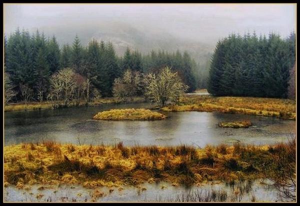 Highland Mist by Raymund