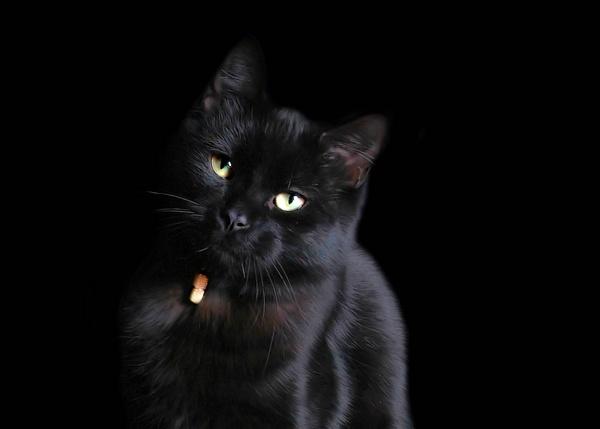 Boudoir cat by lollydeakins