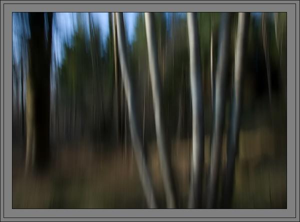 Silver Birch by M0TFT