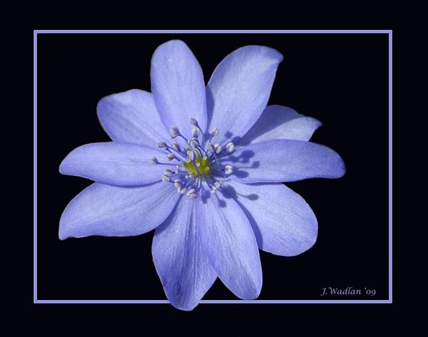 Wild Blue by jmw58