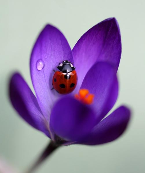 Springtime by MandsH