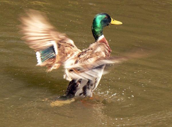 Making a splash by roymag