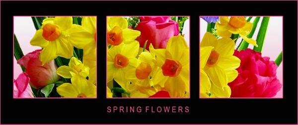Spring Triptych by Mewinty