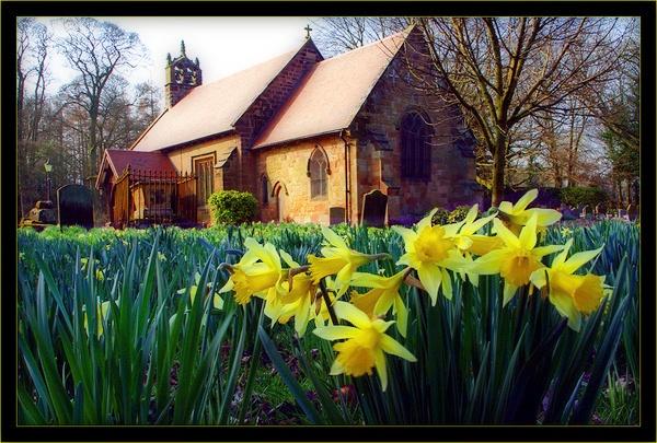 Daffodils & Church by videotec
