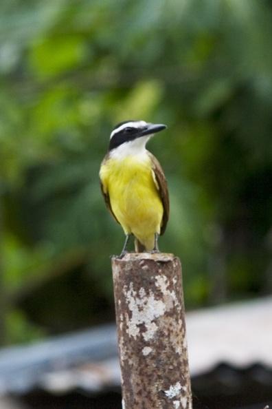 Lonely Bird by darrylhp