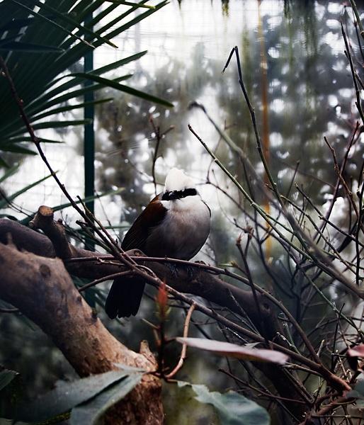 wild bird by geosami