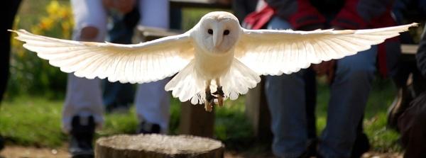 Angel. by Wilmot