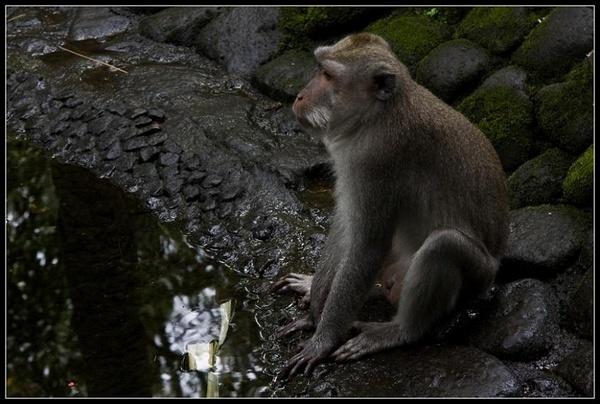 Monkey Potrait by deja008