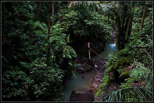 A Monkey Forest by deja008