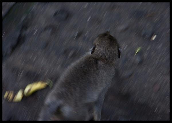 Monkey on the run by deja008