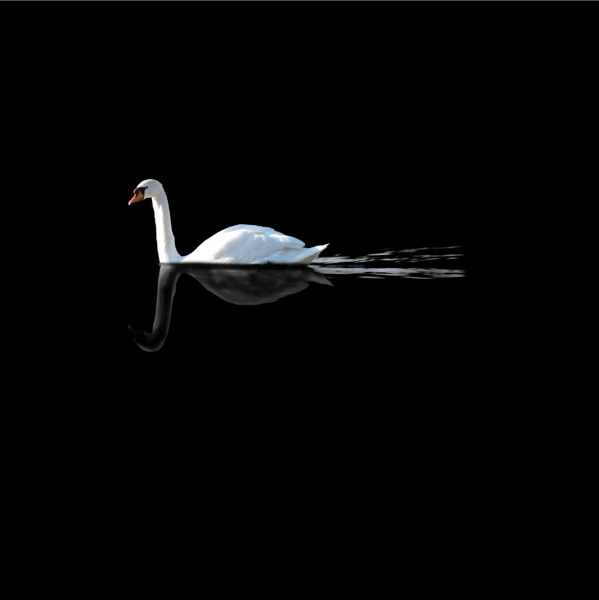 Swan by Swanvio