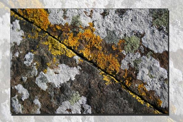 Lichen by bombmac