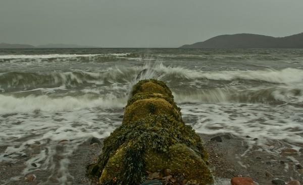 semi wild waves by abesad