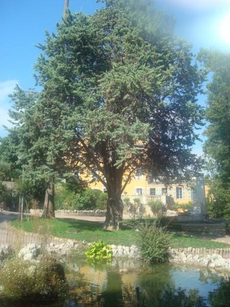 A Big Tree, In A Beautiful Garden by emiyellow