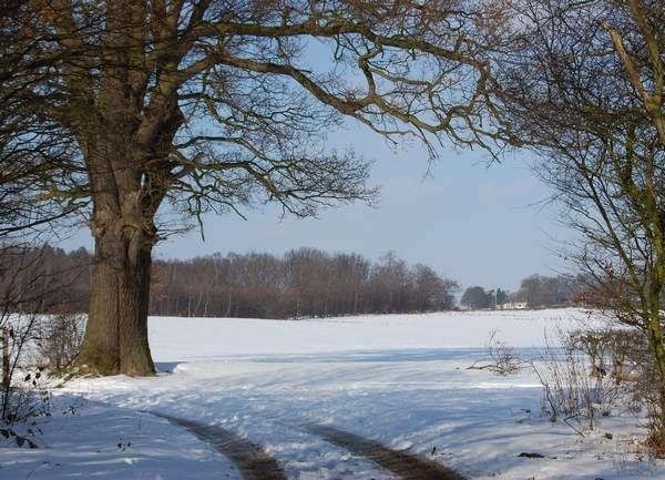 Snow in Tewin by Rachel99