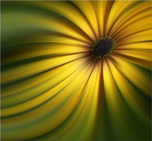 osteospermum by jacquienewsham