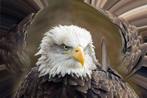 Eagle Eyed by jayman