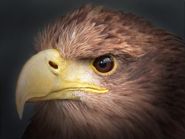 eagle eyes by bunbeam