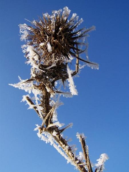 frosty by theroadruner