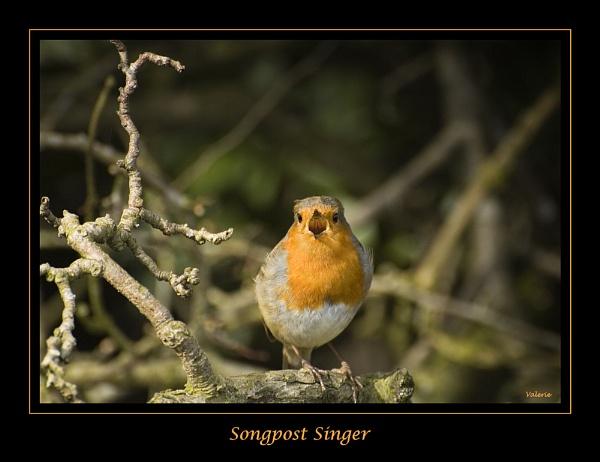 Songpost Singer by Valerie1