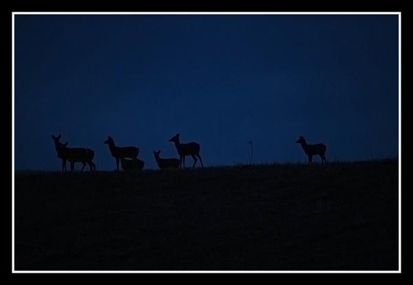 Midnight Deer by Xxticy