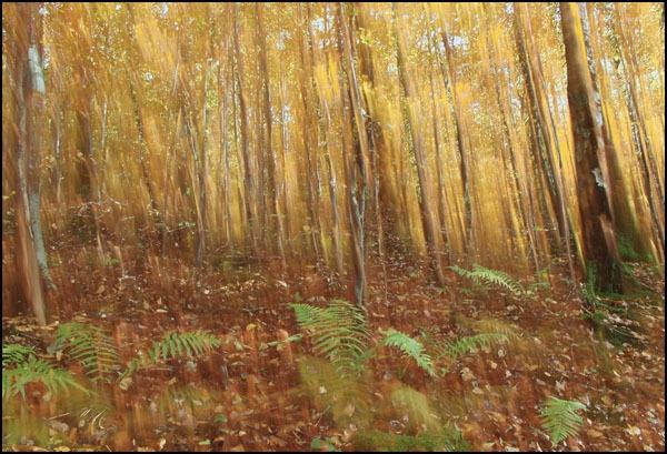 autumn  impression by bill78