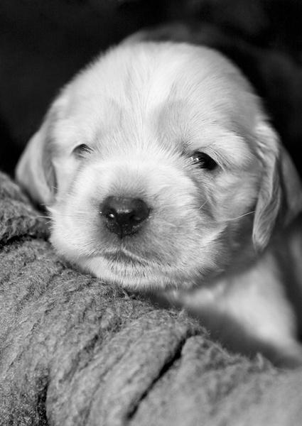 Puppy by smig44
