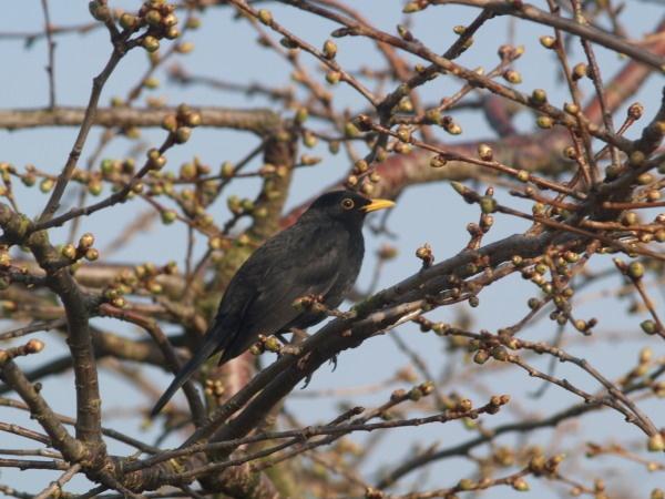 Bird & Buds by steve51158