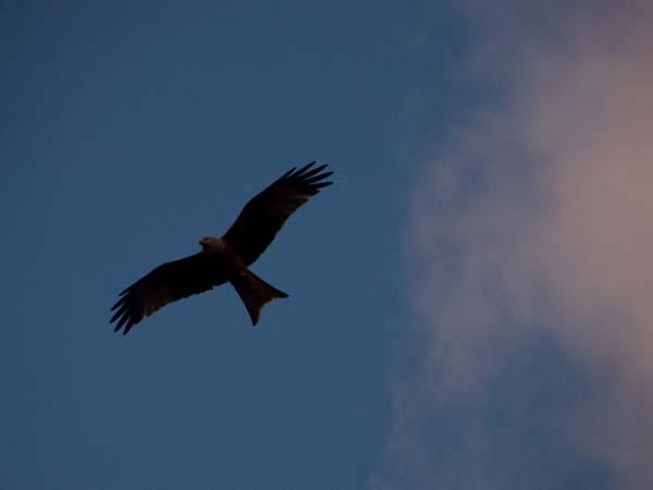 kite by kanecompact